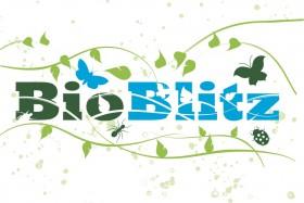 Take part in a BioBlitz near you!