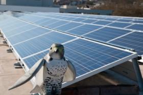 At-Bristol's PV Array with robotic peregrine falcon (Brian)