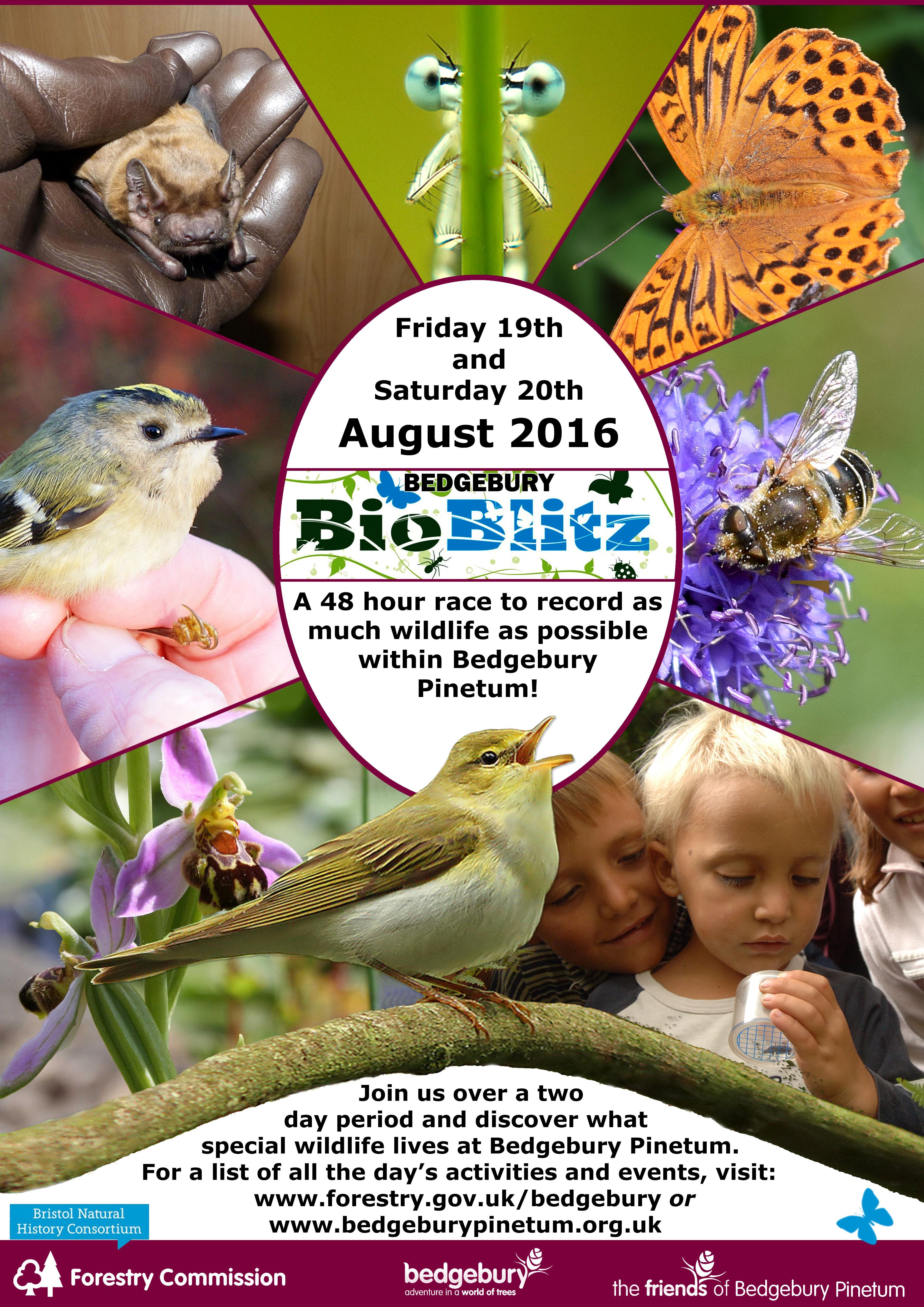 BioBlitz Poster