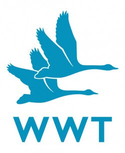 volunteer with WWT