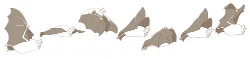 horseshoe bat flying coloured
